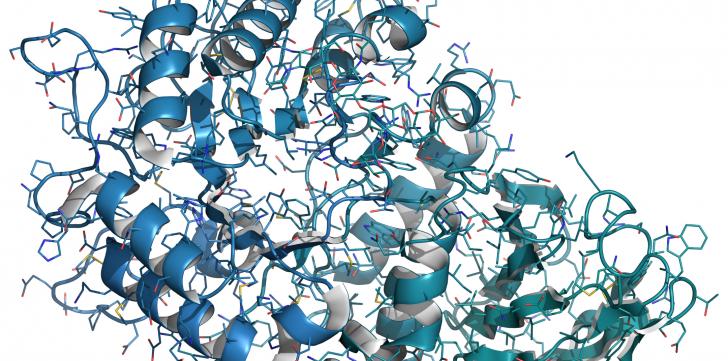 enzyme-digestive-phycocyanine-spiruline