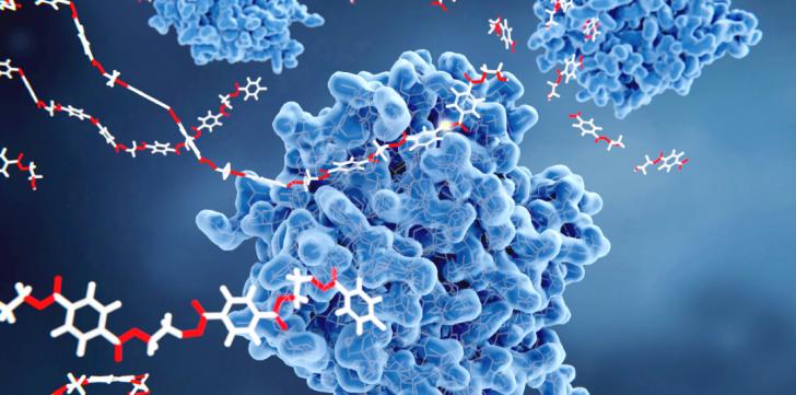 molécules sur protéine